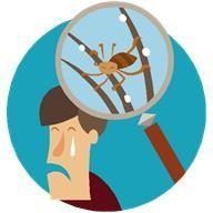 Head Lice and Nits